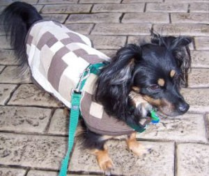 Dog Coat for Cold Weather