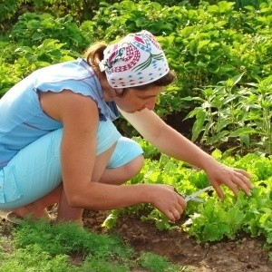 Three important tips for new organic gardeners