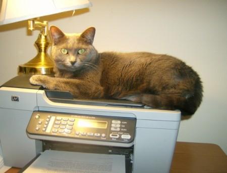 Graycie on top of copy machine.
