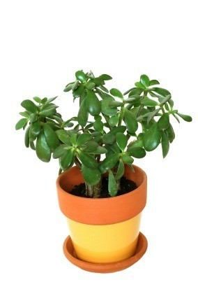 Photo of a potted plant.