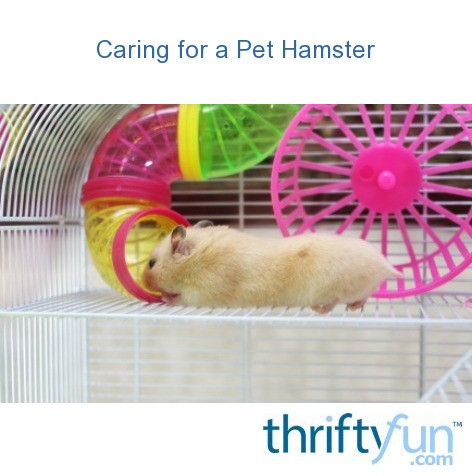Caring for a Pet Hamster | ThriftyFun