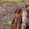 Photo of a tree stump.