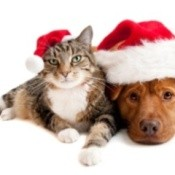 Dog and Cat in Santa Hats