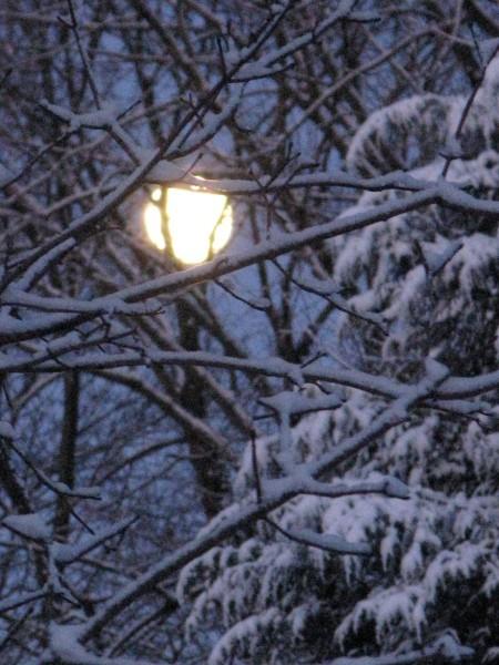 Full moon through snowy trees.