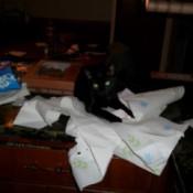 Bindi, a black cat tearing up paper towels.
