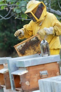 Honey Producing Beehive