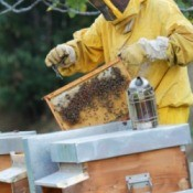 Honey Producing Beehive
