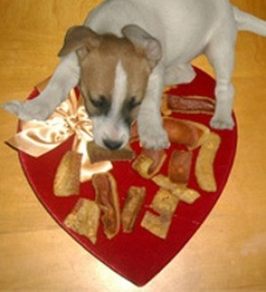 Puppy with pig ear chews.