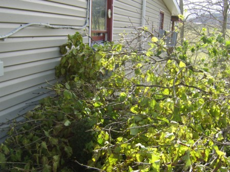 downed tree and siding damage