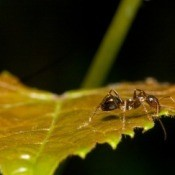 Ant on a leaf.