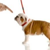 Leash Training a Puppy