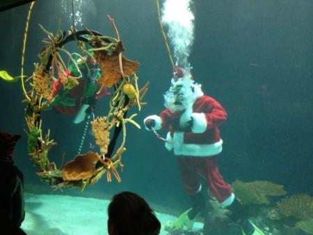 diving santa