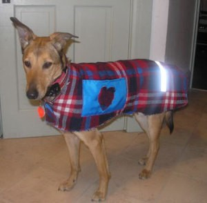 Dog wearing coat.