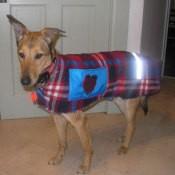 Dog wearing coat.