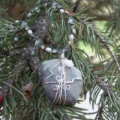 Hesperus Necklace in spruce tree.
