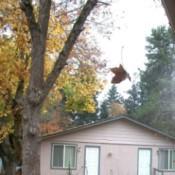 Leaf dangling in midair.
