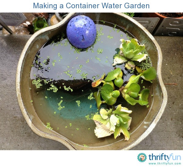 Water Container Garden: Making A Container Water Garden