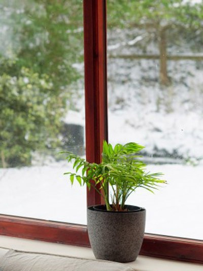 potted plant sitting on window ledge with snowy ground outside
