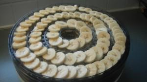 Banana slices on dehydrator tray.