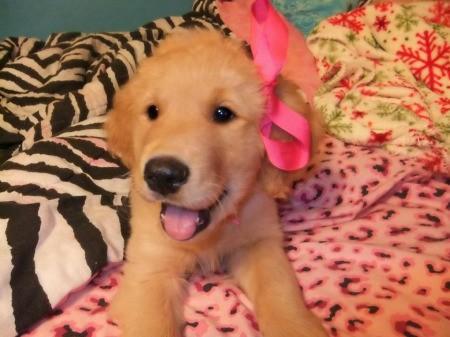 Puppy on fabric.