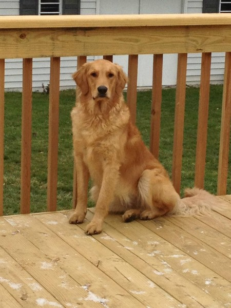 Sandy on deck.
