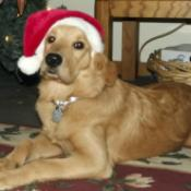 Scout With a Santa Hat