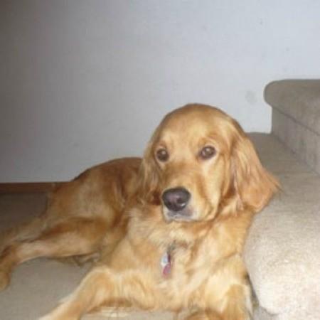 Duchess (Golden Retriever)