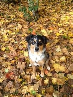 Freida in fall leaves.