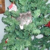 Fuzzy (Cat)