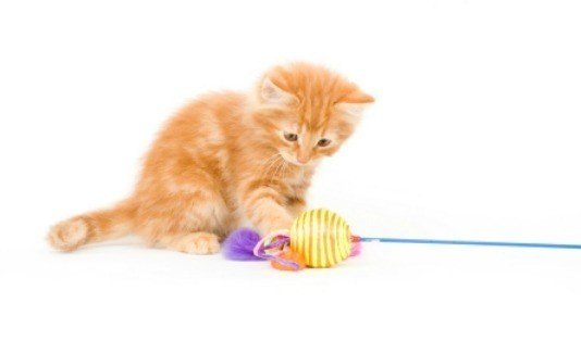 best toys for cats home alone