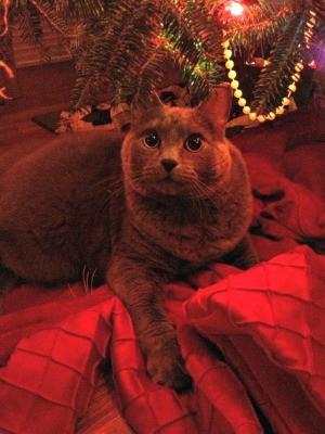 Cat under the tree.