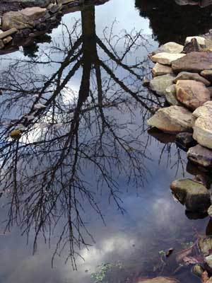 Preparing your pond for winter