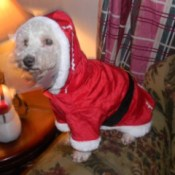 Angel in her Santa suit.