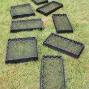 Uses for Plastic Plant Trays