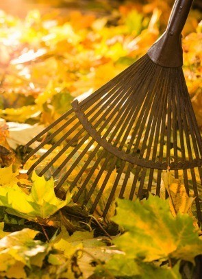 Close up of rake with fall leaves