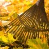 A rake with fall leaves