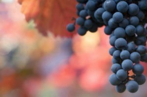 Composting Grapes