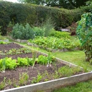 raised vegetable garden bed