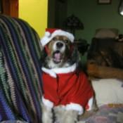 Lexi in her Santa suit.