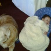 Lab lying next to infant.