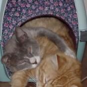 Cats sharing pet tube.