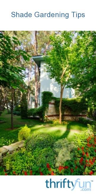 Shade Gardening Tips Thriftyfun