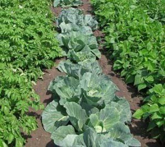Planning And Rotating Your Crops Thriftyfun