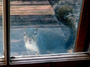 Squirrel Waiting for Breakfast
