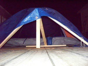 Pup tent with blue tarp for dog shelter.
