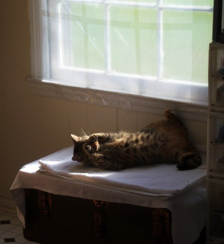 Carina the cat sunning herself by the window