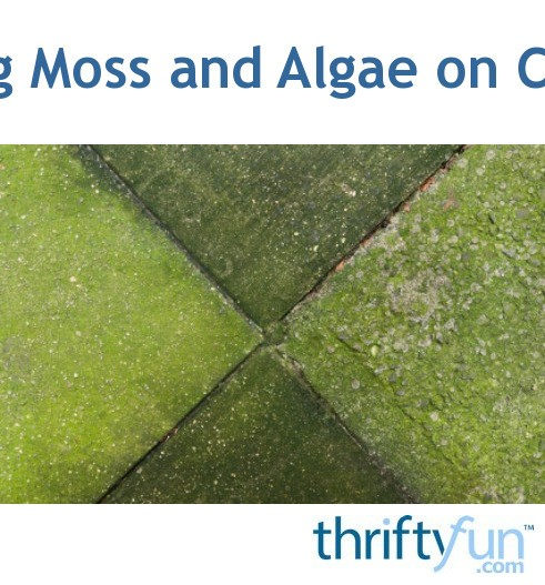 Getting Rid Of Moss And Algae On Concrete Thriftyfun