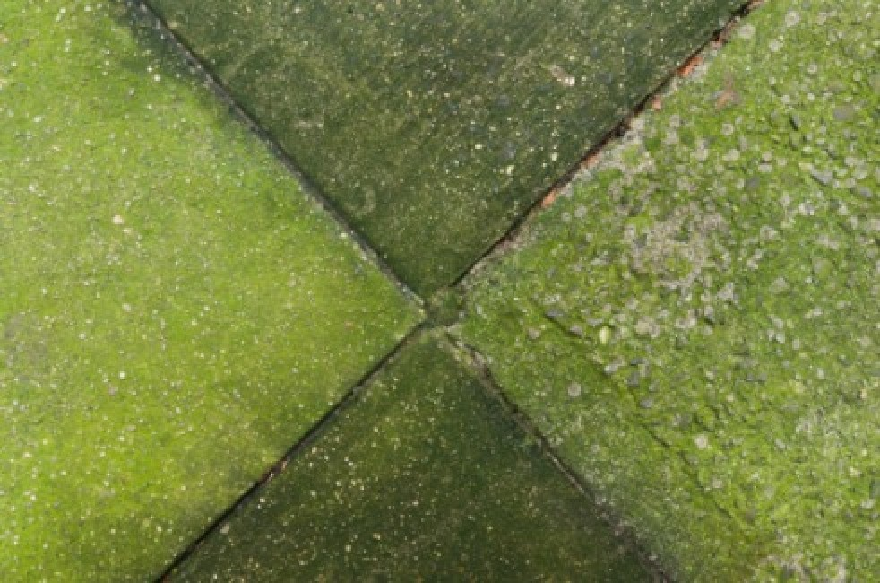 Getting Rid of Moss and Algae on Concrete | ThriftyFun