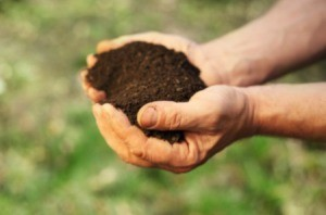 Testing Your Own Garden Soil