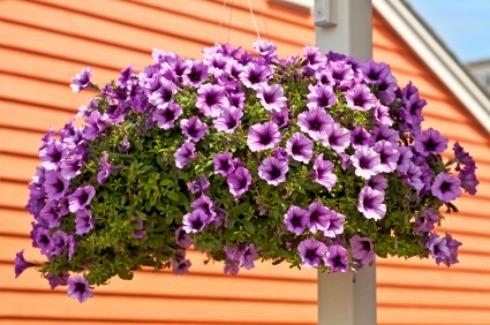 Homemade Plant Hanger Ideas Thriftyfun